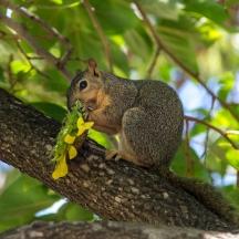 SquirrelThief-1024