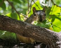 SquirrelThief-1026