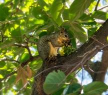 SquirrelThief-1040