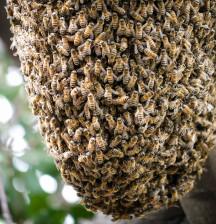 bee hive-1020954