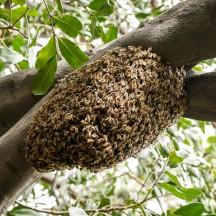 bee hive-1020963