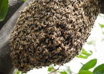 bee hive-1020964