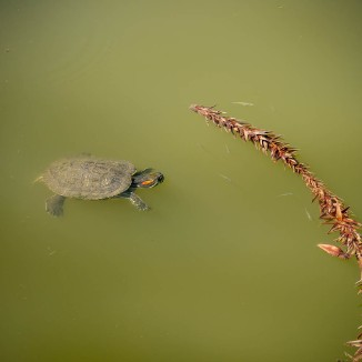Turtles-1020818