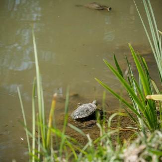 Turtles-1020825