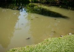 Turtles-1020828