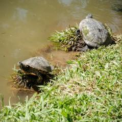 Turtles-1020829