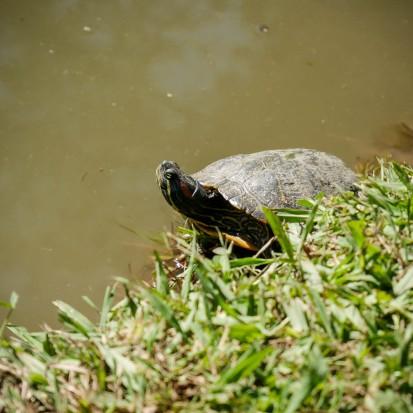 Turtles-1020831