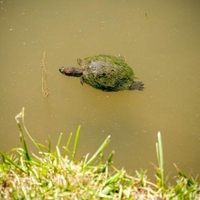Turtles-1020834