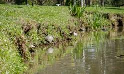 Turtles-1020844