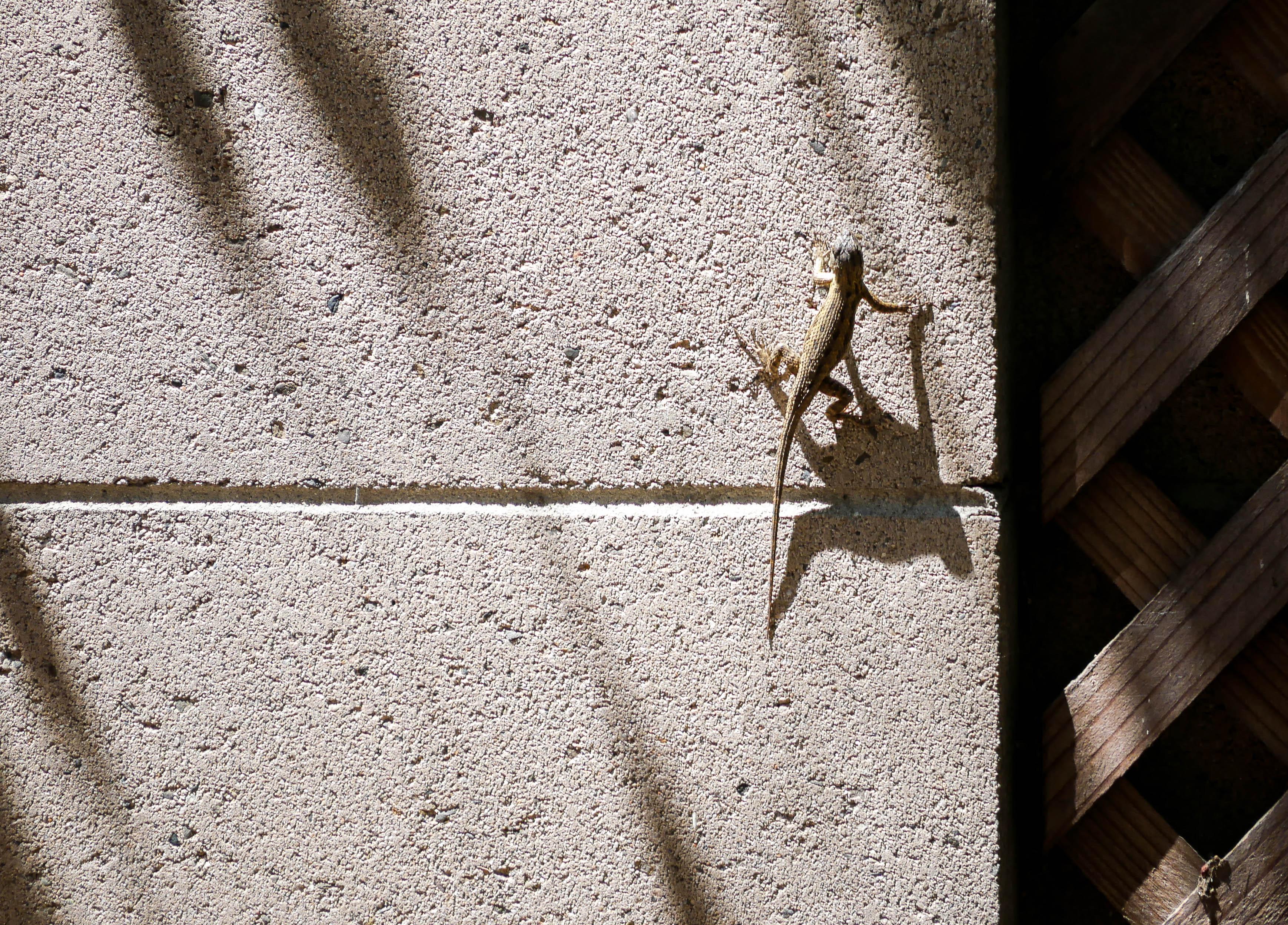 Lizard-1040300